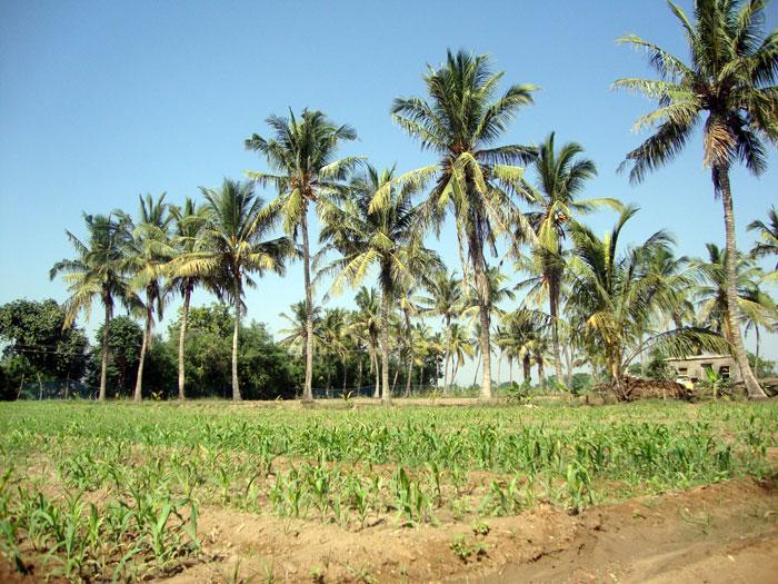 Our Own Farm